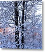 Snow Maple Morning Landscape Metal Print