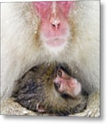 Snow Monkey Love Metal Print
