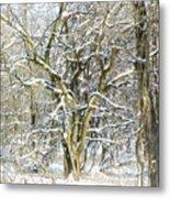 Snow On A Hedge Tree Metal Print