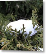 Snow On Cedar Tree Metal Print