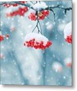Snow On Red Berries Metal Print