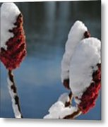 Snow On Sumach Metal Print
