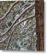 Snow On The Branches Metal Print