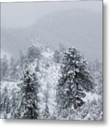 Snow On The Ridge In The Pike National Forest Metal Print