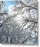 Snow On Trees Metal Print