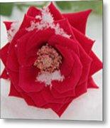 Snow Rose Metal Print