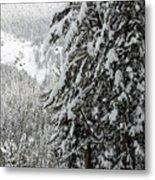 Snow, Trees, Yellowstone Metal Print