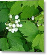 Snow White Berries Metal Print