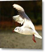 Snow White Seagull Metal Print