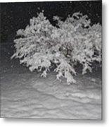 Snow White Tree Metal Print