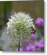 Snowball And The Bumblebee Metal Print