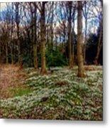 Snowdrop Woods 2 Metal Print