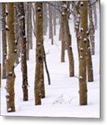 Snowy Aspen Metal Print
