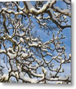 Snowy Branches Metal Print