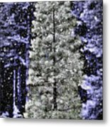 Snowy Day Pine Tree Metal Print