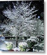Snowy Dogwood Tree At Night Metal Print