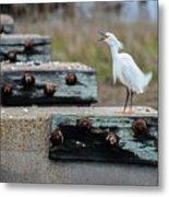 Snowy Egret #2 Metal Print