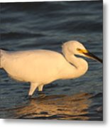 Snowy Egret By Sunset Metal Print