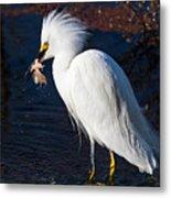 Snowy Egret Eating Fish Metal Print