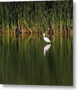 Snowy Egret In Marsh Reinterpreted Metal Print