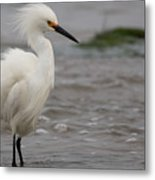 Snowy Egret In The Wind Metal Print