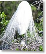 Snowy Egret Mom And Chick Metal Print