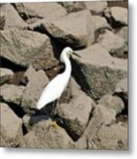 Snowy Egret On The Rocks Metal Print