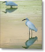 Snowy Egret Reflections  Metal Print