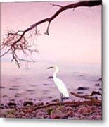 Snowy Egret Solitude Metal Print