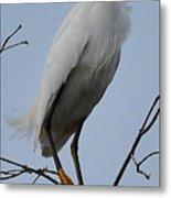 Snowy Egret  Watching Metal Print