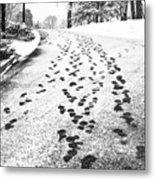 Snowy Footsteps Metal Print