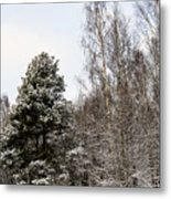 Snowy Forest Edge Metal Print