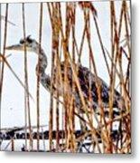 Snowy Heron? Metal Print