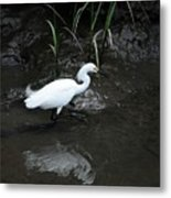 Snowy In The Mud Metal Print