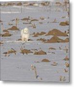 Snowy Owl 2016-9 Metal Print