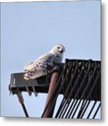 Snowy Owl 2959 Metal Print