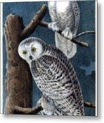 Snowy Owl Audubon Birds Of America 1st Edition 1840 Royal Octavo Plate 28 Metal Print