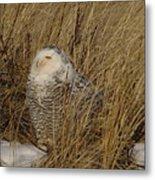 Snowy Owl In Grass Metal Print