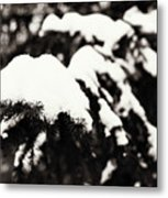 Snowy Pine Branches Metal Print