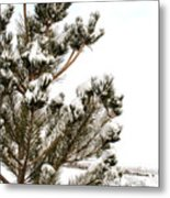 Snowy Pine Metal Print