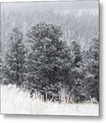 Snowy Pines In The Pike National Forest Metal Print