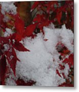 Snowy Red Maple Metal Print