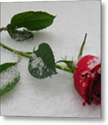Richard's  Rose Metal Print