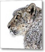 Snowy Snow Leopard Metal Print