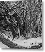 Snowy Tree Bench In Black And White Metal Print