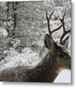 Snowy Young Buck Metal Print