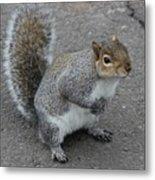 So.... Got Nuts? Metal Print