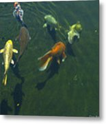 So Koi Metal Print