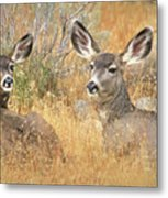 So Much For Your Secret Place... Metal Print