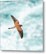 Soaring Above The Churning Sea Metal Print